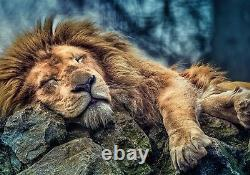 Trefl 1000 Piece Adult Large Sleeping Majestic Lion Floor Jigsaw Puzzle NEW